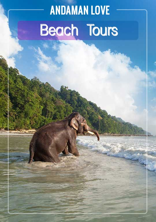 Andaman Love - Explore Andaman With Us | Book Now